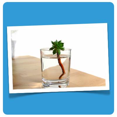 komfortzone pflanze in glas
